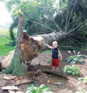 Above: Jerek Bly, who turns 3 years old this month, points to the large pine tree that was blown down at his family's home in the 500 block of Vine Street after the Tuesday night, July 2 thunderstorm. It was one of two trees toppled at the residence. Right: Utility poles were blown over along Co. Rd. D east of Co. Rd. 21, west of the Co. Rd. D slant crossing. Reports say electrical service was out on the north side of Archbold, Pettisville, and Burlington-Elmira.– photos by David Pugh